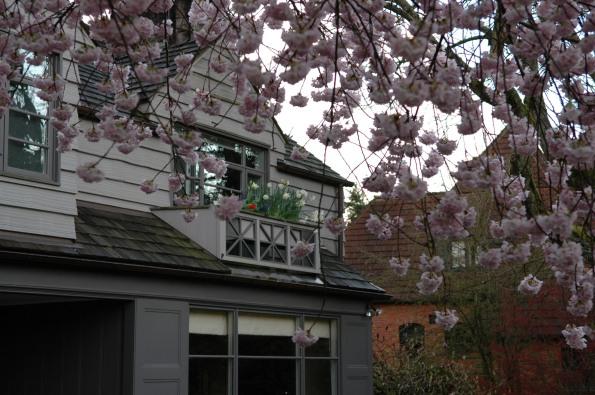 Master balcony, through cherry tree