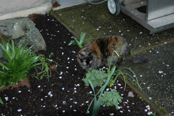 Emma with her catnip, back patio